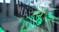 Top Marijuana Stocks On Wall Street