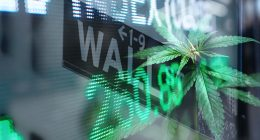 Top Marijuana Stocks On Wall Street
