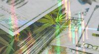 Top Marijuana Stocks Today In February