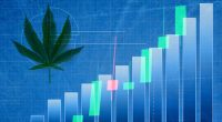 Top Pot Stocks To Watch Last Week Of February