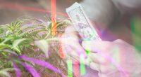 Cannabis Stocks On The Rebound
