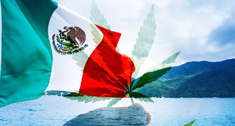 Mexican Marijuana Stocks