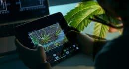 Top Marijuana Stocks For 420 Watchlist