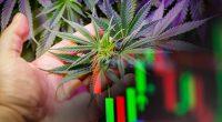 Best Marijuana Stocks To Watch Right Now In June