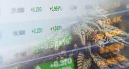 Best Pot Stocks To Buy In June