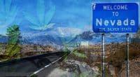 Nevada Legalized Cannabis