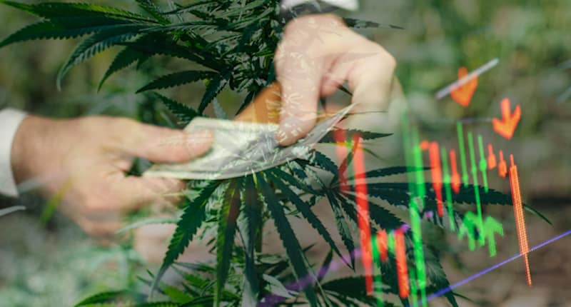 Best Marijuana Stocks To Buy In June? 2 To Add To Your Watchlist Right Now | Marijuana Stocks | Cannabis Investments and News. Roots of a Budding Industry.™