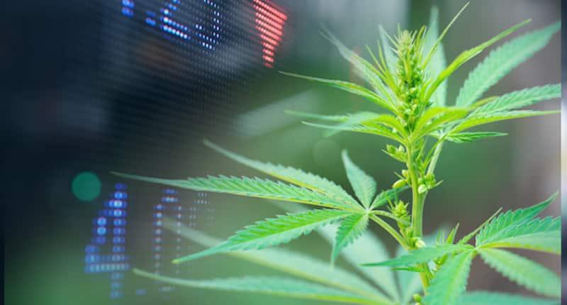 Top Marijuana Stocks In The US