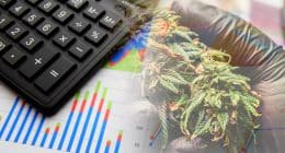 Top Performing Cannabis Stocks In 2021