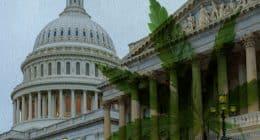 Schumer Marijuana Legislation