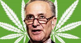 chuck-schumer Cannabis Reform