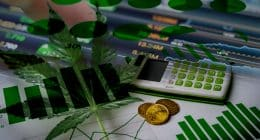 Best Cannabis Stocks 2nd Week In August