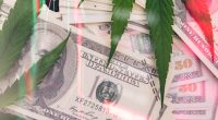 Cannabis Stocks To Buy 4th Week In August