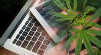 Marijuana Stocks To Buy After SFAE Banking Act