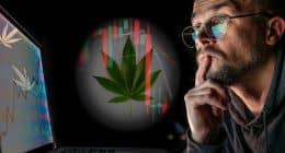 Best Marijuana Stocks Next Week In October