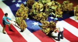 Cannabis USA Federal