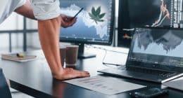 Top Marijuana Stocks Second Week In October